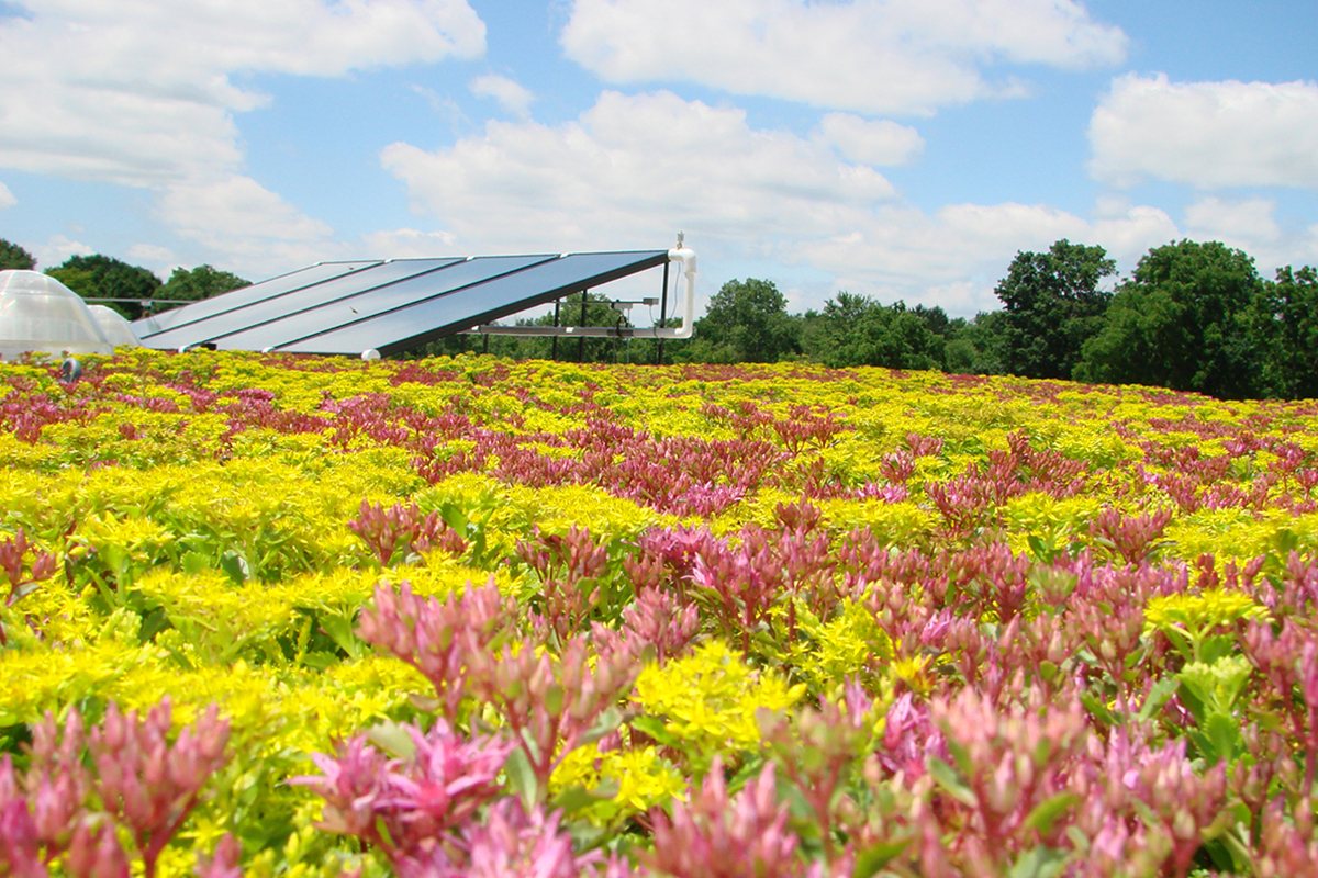 Colorful pink and yellow flowers fill a green roof with solar panels.