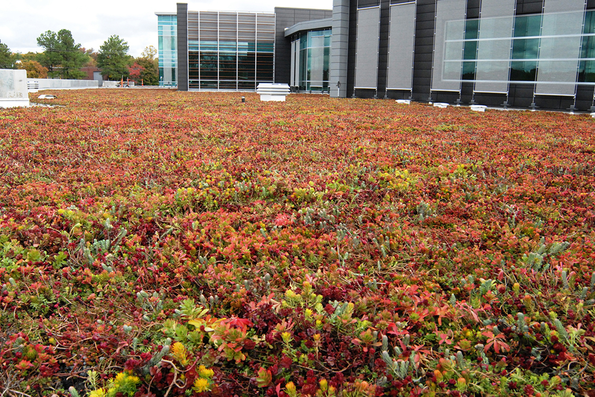 Colorful red and green sedum fill the living roof of a building with large glass windows.