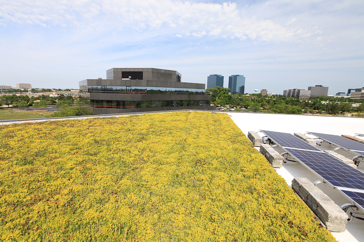 Green and yellow sedum fill a roof with solar panels adjacent.