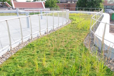 Vibrant green grasses grown in a curved path around a rooftop area.