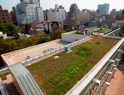 Green Roof Environmental Literacy Laboratory (GELL) Ready for Students Returning to P.S. 41 in Greenwich Village