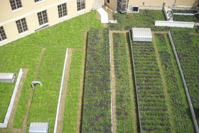 Rows of bright green vegetation cover the green roof at Hipolito F. Garcia Federal Courthouse in San Antonio, Texas.