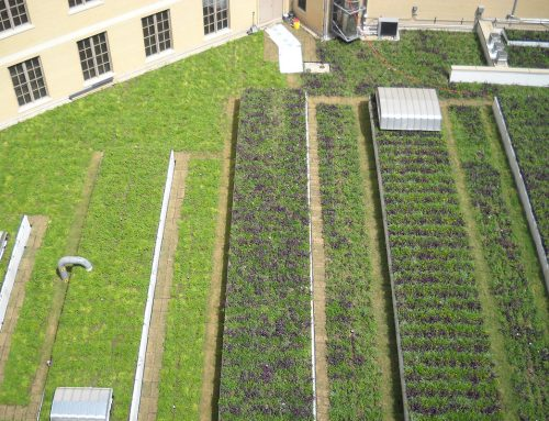 Green Roof Centerpiece of LEED Platinum Courthouse Renovation