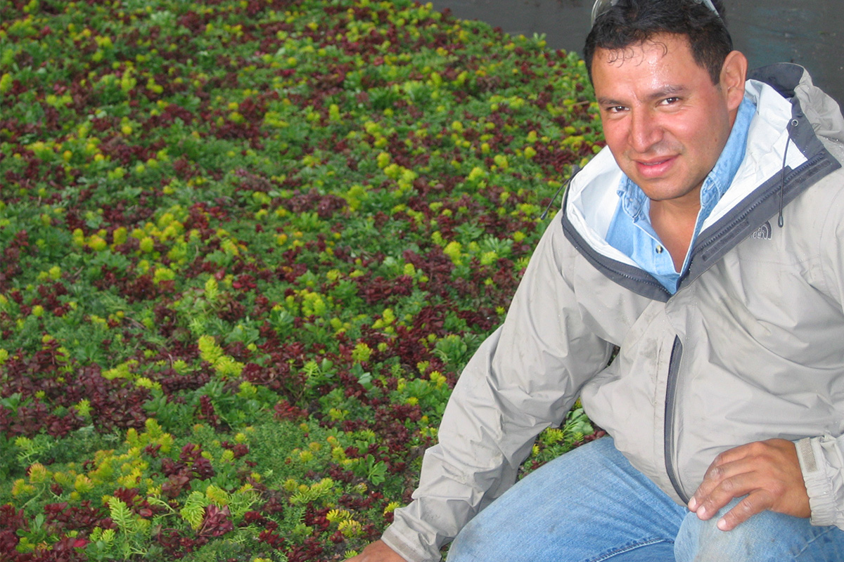LiveRoof installer poses with newly installed vegetated modules.
