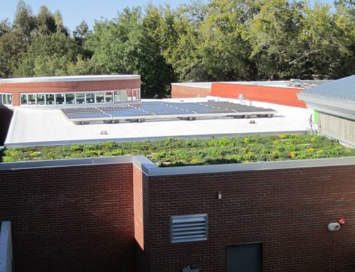 Armstrong Atlantic State University Goes Green
