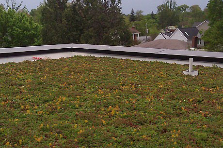 Green roof in Arlington, Virginia.