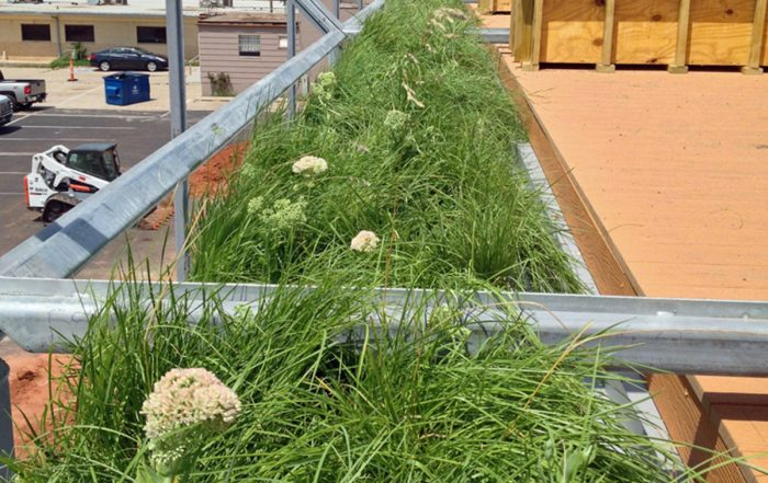 Grasses fill a line of green roof modules.