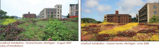 green-roof-plant-evolution