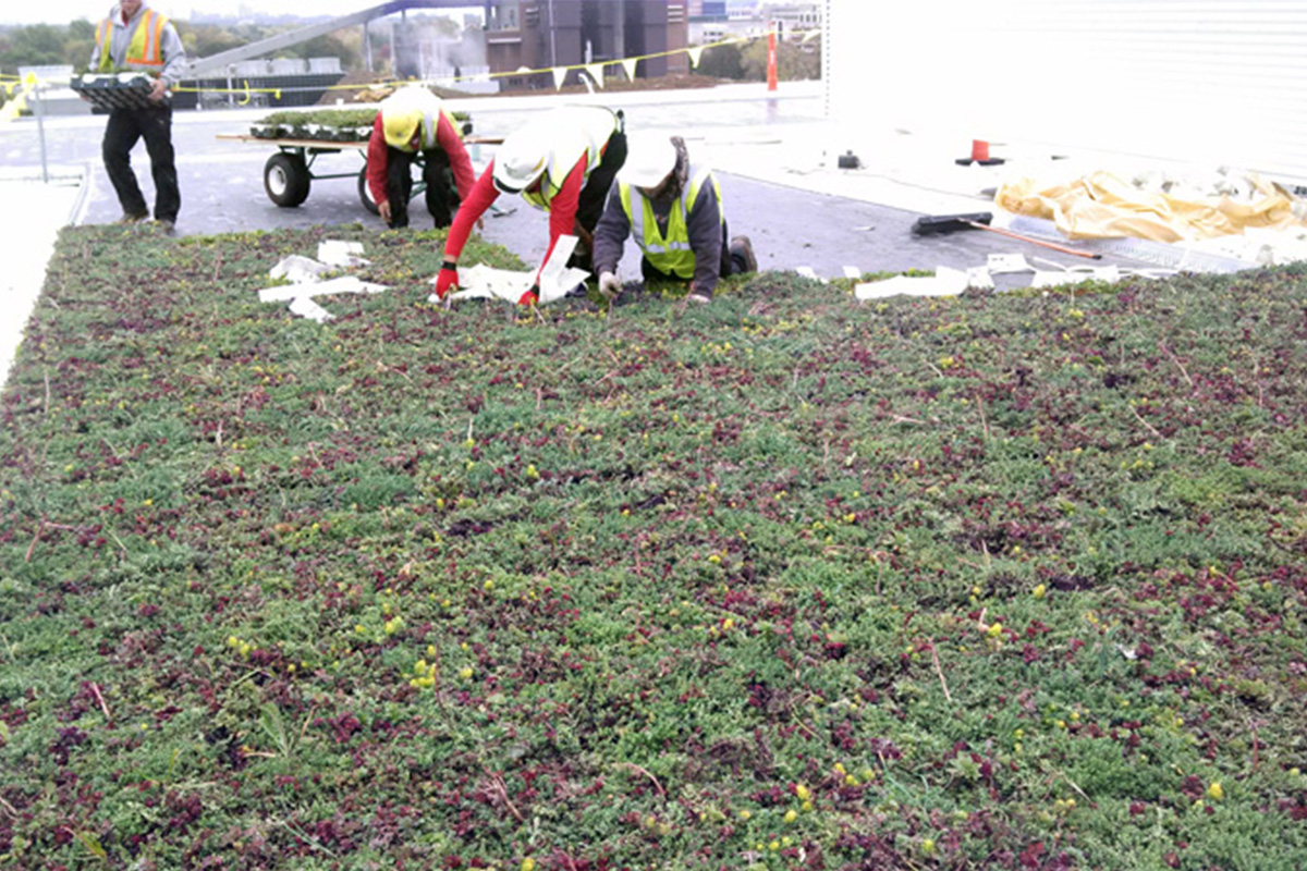 Green roof installers working on the LiveRoof at the University of Wisconsin - Milwaukee.