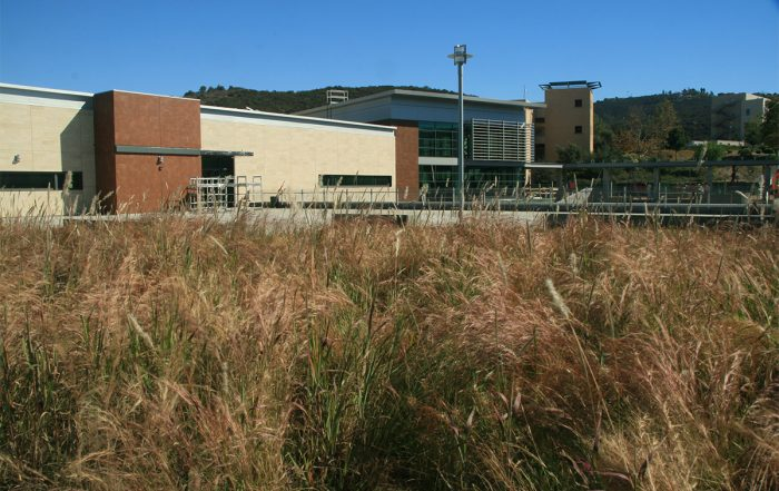 Tall grasses cover part of a green roof.