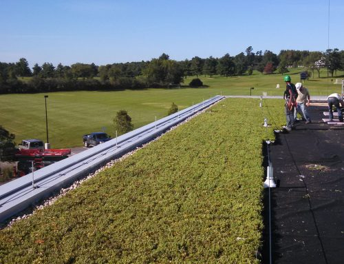 Middlebury College Squash Teams to Play Under Planted Rooftop