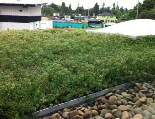 Ninkasi Brewing Protects Local Watershed with Rooftop Gardens