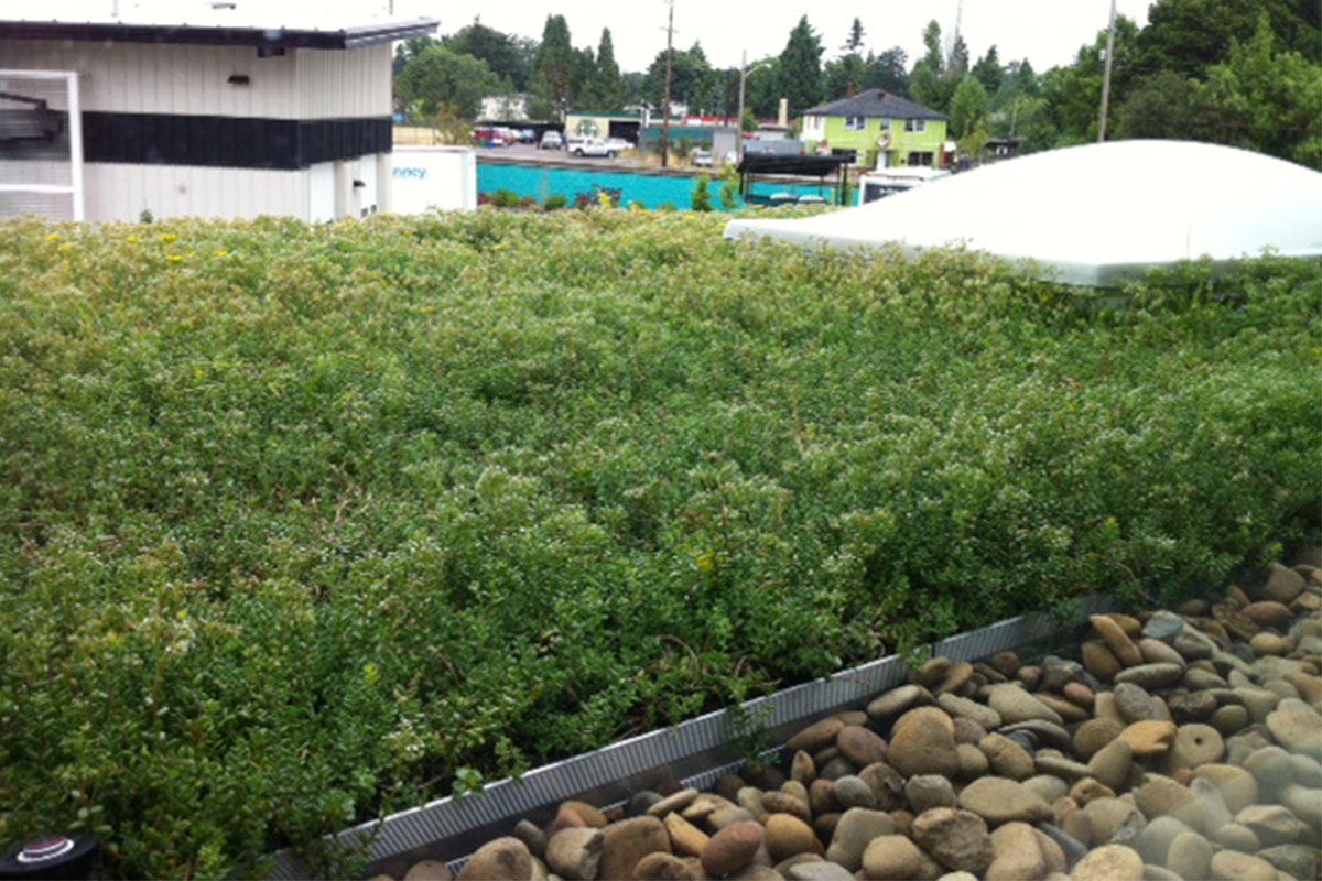 Stones line the edge of a vibrant green rooftop.