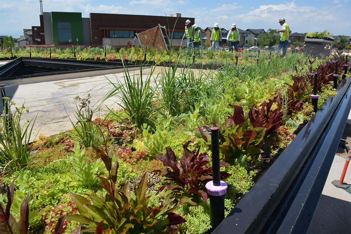 Green roof installer placing colorful, vegetated LiveRoof modules.