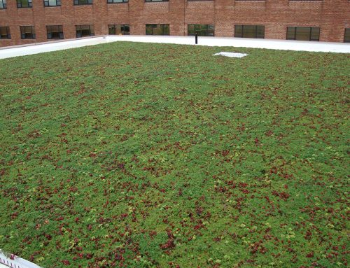 St. Elizabeth Adds Third Green Roof to Hospital Campus
