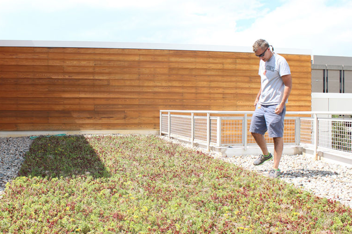 A man stands by and admires a living roof filled with red and green sedum.