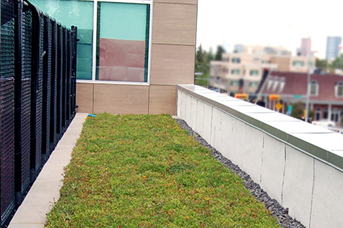 A path of green roof on the rooftop of the Britannia Crossing building in Calgary, Alberta.