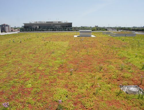 New Humber River Hospital Showcases Sustainability, Incorporates a Planted Roof