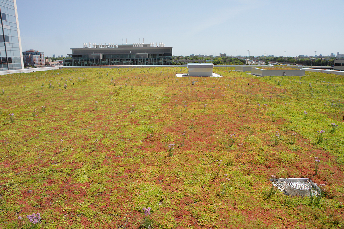 Red and green sedum mix atop a roof.