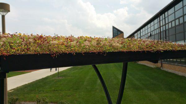 Bowling Green - LiveRoof green roof over bike shelter.