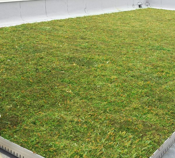 Green roof at Moorestown Municipal Building