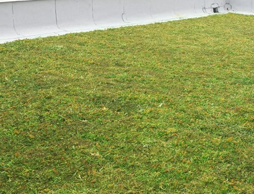 New Green Roof Makes Big News in Moorestown New Jersey