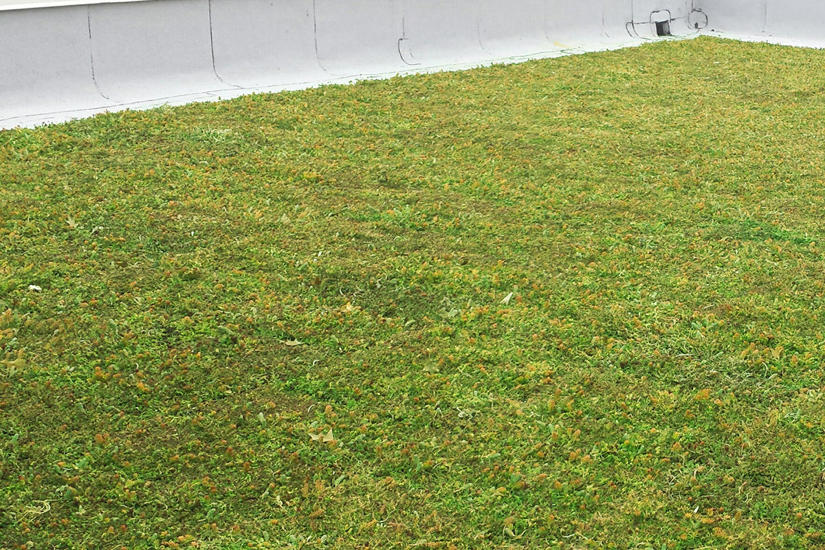 A green living roof.