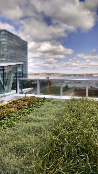 Rows of grass and sedum on top of 101 Seaport.