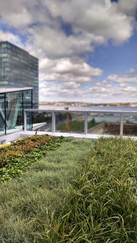 101 Seaport S Sweeping Views Include Liveroof Green Roof Liveroof