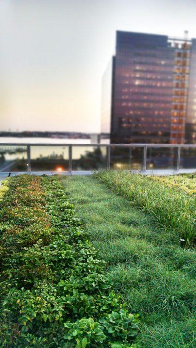 Vibrant green roof in Boston, MA.