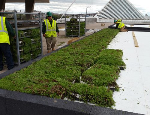 Newly renovated Milwaukee Art Museum installs a green roof as part of  important renovation and reinstallation project