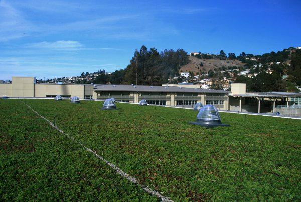 Korematsu Middle School Living Roof.