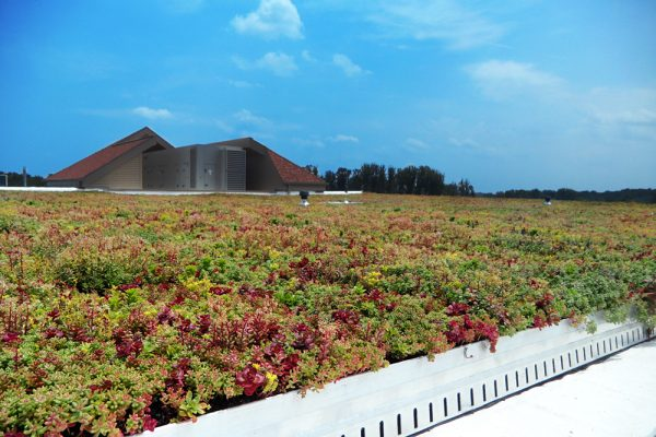 Montgomery County Schools Green Roof by LiveRoof.
