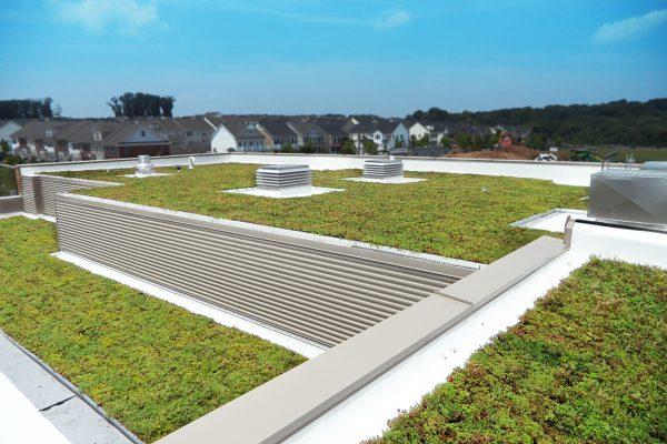 Vibrant sedum on the Montgomery County Schools green roof.