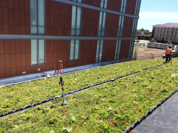 LiveRoof green roof with red and green sedum at Central Michigan University.