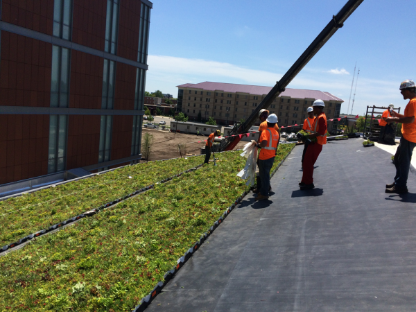 LiveRoof installers working on the green roof at Central Michigan University.