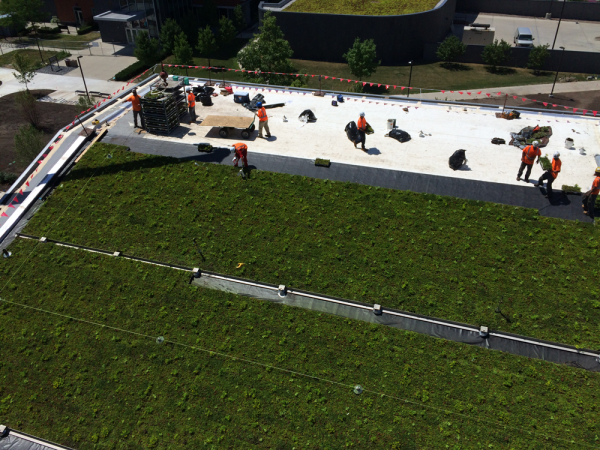 Fully-vegetated LiveRoof green roof modules being installed.