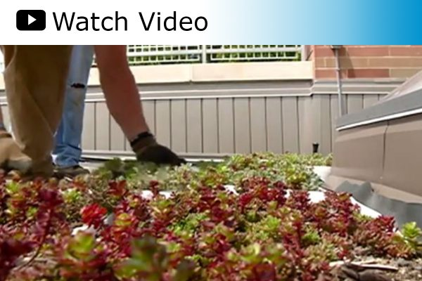 WKBT TV 8 features Western Technical College's new green roof.