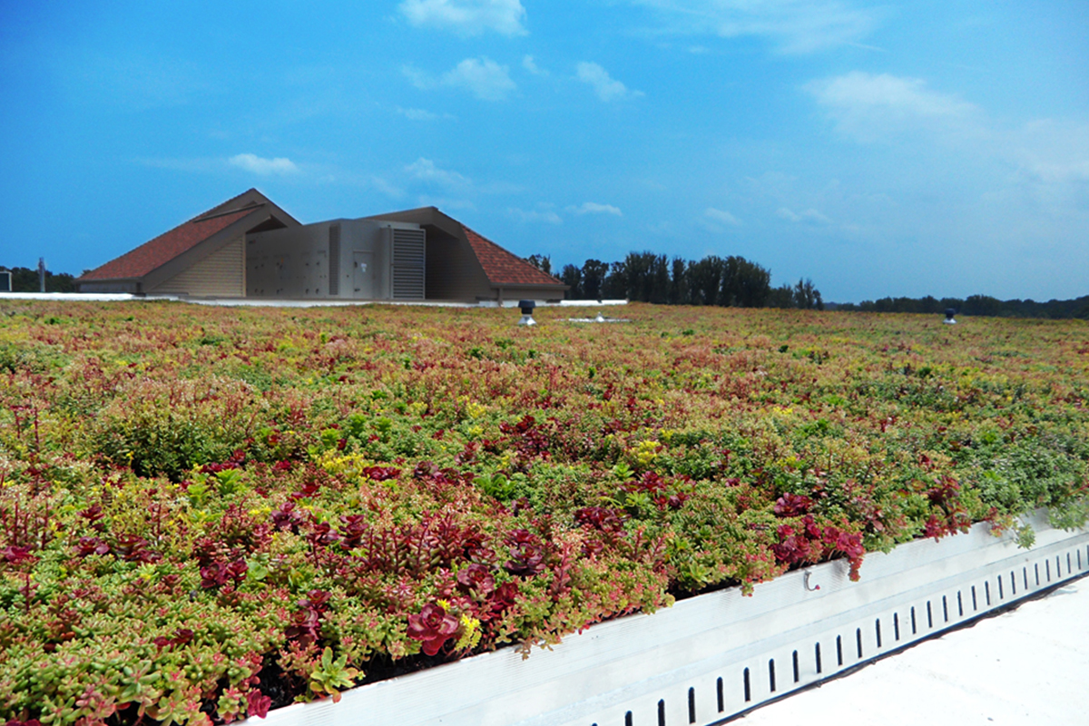Red and green living roof system.