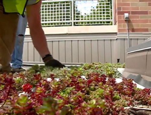 Green Roof with Smart Irrigation System Installed at Western Technical College