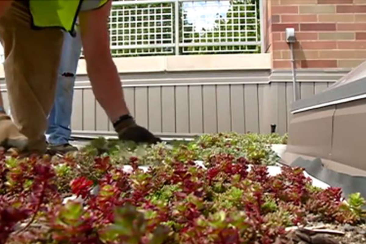 Man installing colorful, vegetated LiveRoof modules at Western Technical College in Lacrosse, Wisconsin.
