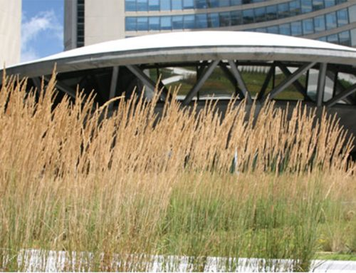 Green roof at Nathan Phillip's Square helps architects earn one of Canada's most prestigious design awards