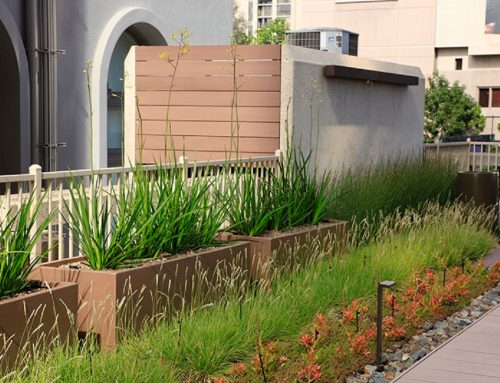 "How to Implement Instant Lightweight ""Intensive"" Green Roofs"