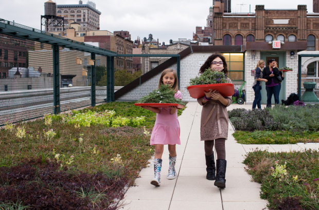 Green Roof Environmental Literacy Laboratory (GELL) at P.S. 41