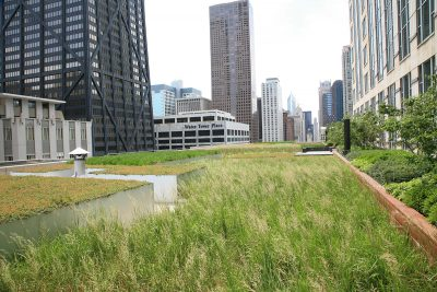 Raised green roof application in downtown Chicago.