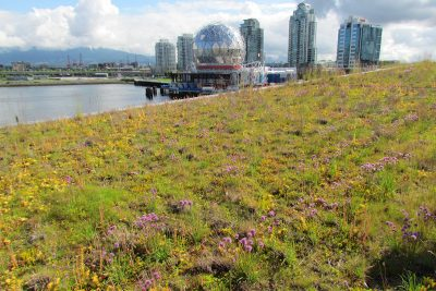 Green roof at the Olympic Village in Vancouver.