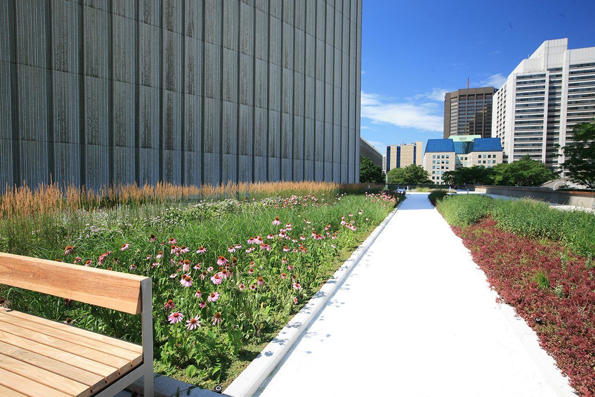 Perennial Vegetated Roof Garden at Nathan Phillips Square of Toronto City Hall