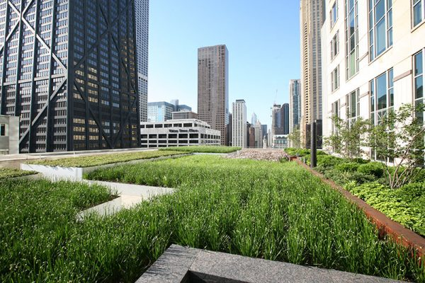 LiveRoof in Chicago on Michigan Avenue with grasses.