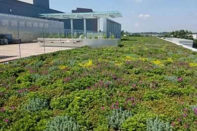 Green, purple, and yellow sedum mix in a green roof.