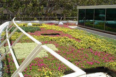 Colorful green roof application at Honolulu University.